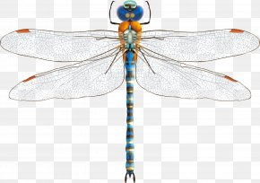 Dragonfly Decoration Vector Material - Dragonfly Download Euclidean Vector PNG