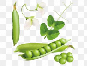 Pea - Snow Pea Euclidean Vector Stock Photography Royalty-free PNG