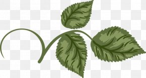 Green Leaves - Flower Bouquet Drawing Rose Clip Art PNG