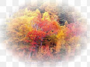Forest - Forest Tree High-definition Television 1080p Landscape PNG