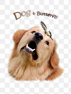 Shirts Dog - Golden Retriever Puppy Dog Breed Companion Dog PNG