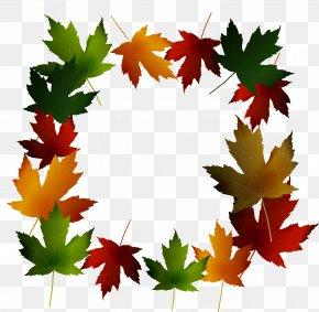 Green Falling Maple Leaf Frame - Maple Leaf Green PNG