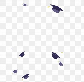 Bachelor Cap - Bachelors Degree Graduation Ceremony Party University Academic Degree PNG