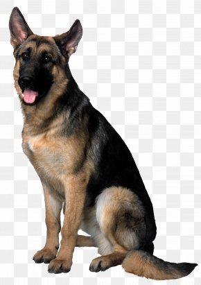 Dog Clip Art Image - Dog Clip Art PNG