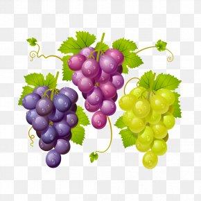 Vector Grapes PNG