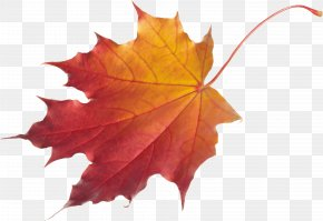 Autumn Leaf - Autumn Leaf Color Red Maple Clip Art PNG