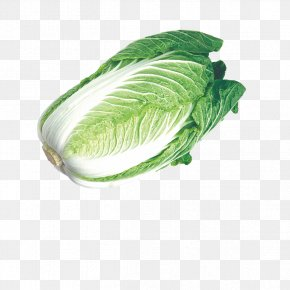 Fresh Cabbage - Chinese Cabbage Napa Cabbage Umami Vegetable PNG