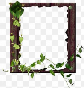 Vine Ivy Family - Background Flower Frame PNG