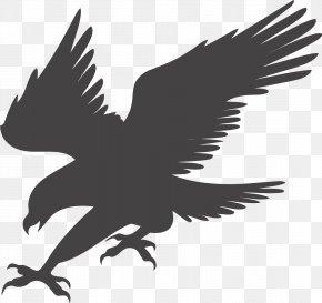 Eagle Hunting - Bald Eagle Clip Art PNG