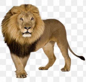 Lion - Lion Icon PNG