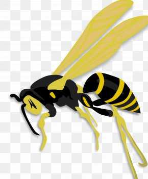 Bumble Bee - Insect Honey Bee Hornet Wasp PNG