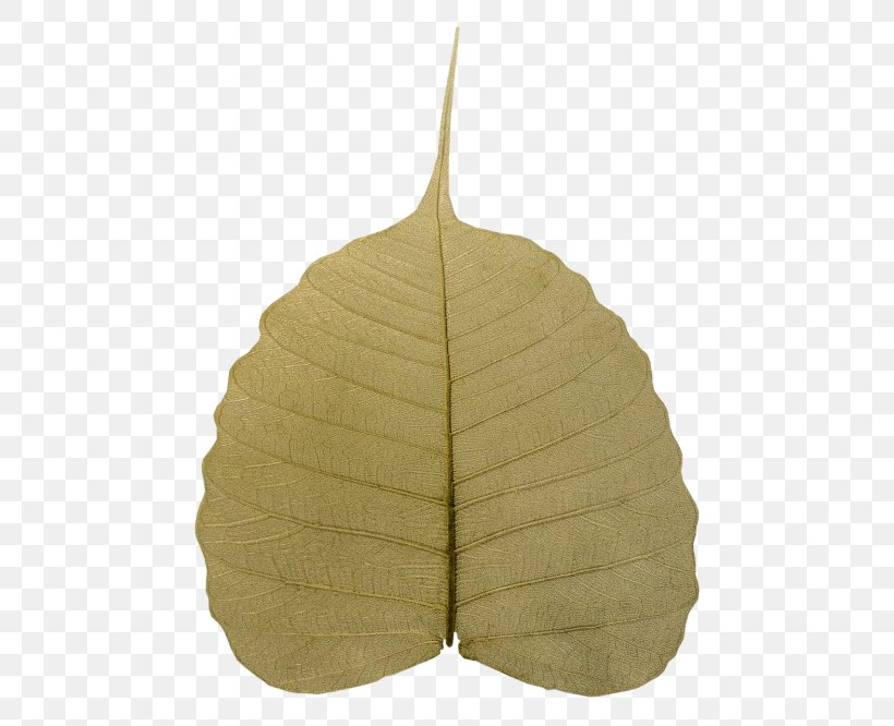 Leaf Tree Plant, PNG, 500x666px, Leaf, Plant, Tree Download Free