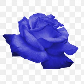 Blue Flowers - Flower Rose PNG