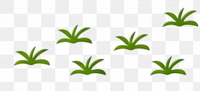 Herbaceous Plant Drawing Animation Clip Art PNG