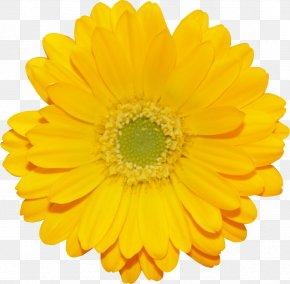 Zipper - Calendula Officinalis Marigold Flower Transvaal Daisy Shellcraft PNG