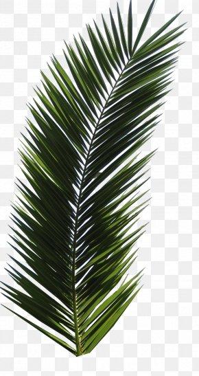 Palm Tree - Autumn Leaf Color Computer File PNG