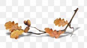 Autumn - Autumn Summer Desktop Wallpaper Clip Art PNG