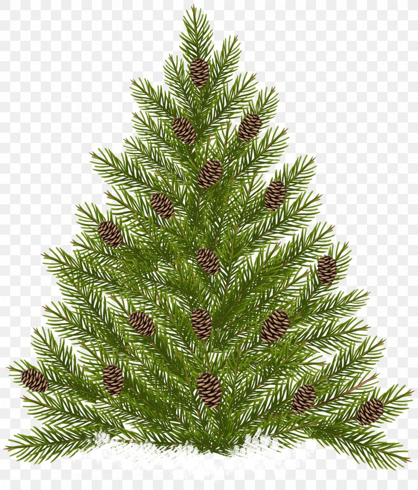 Raster Graphics, PNG, 3414x4000px, Pine, Christmas Decoration, Christmas Ornament, Christmas Tree, Conifer Download Free