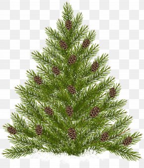Pine Tree With Cones Transparent Clip Art - Raster Graphics PNG