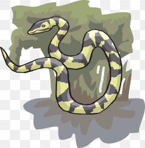 Snake - Snake Reptile Tree Ahaetulla Clip Art PNG