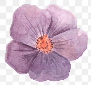 Gorgeous Flower - Watercolor Painting Stock Photography Drawing Paper Watercolor: Flowers PNG