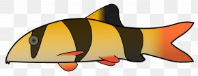 Clown Pictures - Clown Loach Fish Clip Art PNG