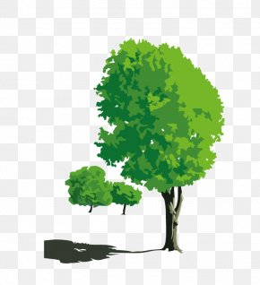 Trees - Photography Nature Cartoon PNG