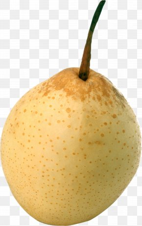 Ripe Pear Image - European Pear Papa Pear Saga Princeton University Rosaceae PNG