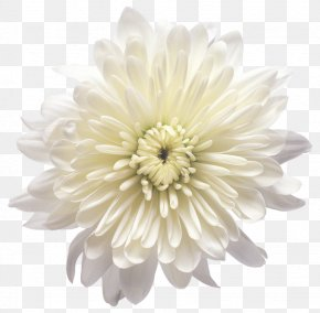 White Chrysanthemum Flower Transparent Clip Art Image - Flower White Balloon PNG