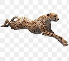 Running Cheetah - Cheetah Zoo Tycoon 2 PNG