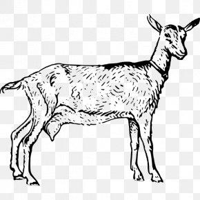 Goat - Boer Goat Black Bengal Goat Poitou Goat Russian White Goat Sheep PNG