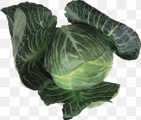Cabbage - Collard Greens Leaf Vegetable Cabbage Food Brussels Sprout PNG