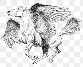 Book - Coloring Book Drawing Pegasus Sketch PNG