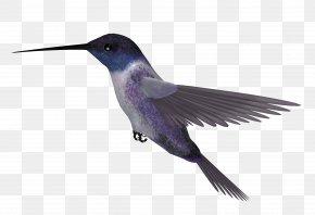 Hummingbird Picture - Hummingbird Blue-throated Mountaingem Clip Art PNG
