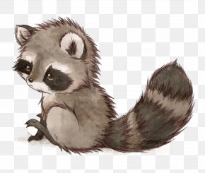 Vector Small Raccoon - Raccoon Squirrel Drawing Cuteness Cat PNG
