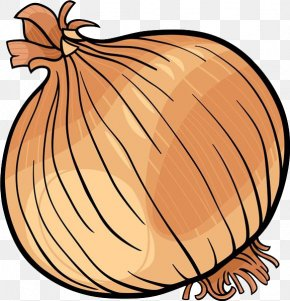 Cartoon Onion Material - Onion Vegetable Black And White Clip Art PNG