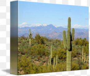 Cactus Canvas - Biome Shrubland Vegetation Landscape Citroën Cactus M PNG