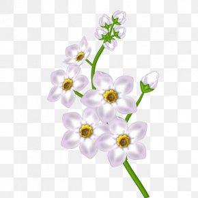 White Flower Transparent Clipart - Flower Floral Design PNG