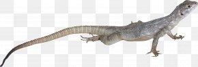 Lizard - Lizard Reptile Clip Art PNG