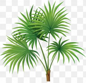 Hand-painted Palm Leaves - Arecaceae Tree Sabal Palm Leaf Clip Art PNG