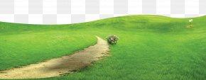 Green And Fresh Grass Floor Decoration Design - Crop Grassland Steppe Land Lot Rural Area PNG