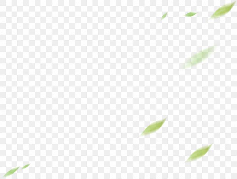 Plant Stem Leaf Desktop Wallpaper Font Computer, PNG, 1041x789px, Plant Stem, Botany, Computer, Flower, Grasses Download Free