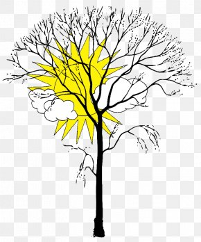 Tree - Coloring Book Tree Branch Trunk Leaf PNG