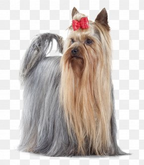 Croquettes - Yorkshire Terrier Australian Silky Terrier Cairn Terrier Cat Food Companion Dog PNG