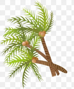 Vector Hand Painted Green Coconut Tree - Arecaceae Coconut Tree Euclidean Vector PNG