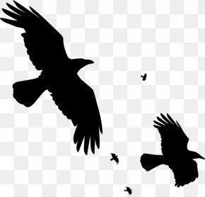 Flying Raven Overlay - Bird Common Raven Carrion Crow Clip Art PNG