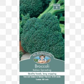 Broccoli Sprouts - Heirloom Plant Leaf Vegetable Cherry Tomato Heirloom Tomato PNG