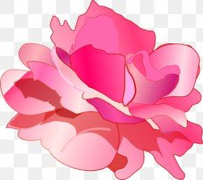 Pink Roses Photo - Rose Pink Drawing Clip Art PNG