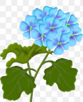 14 - Flower Lantana Camara Clip Art PNG