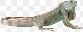Lizard - Lizard Reptile Wallpaper PNG